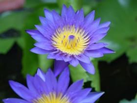 Tranh hoa lá DHL2001