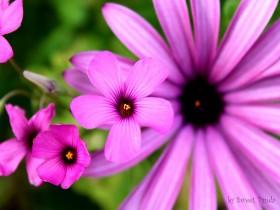 Tranh hoa lá DHL2002