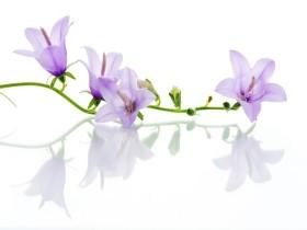 Tranh hoa lá DHL2003