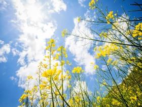 Tranh hoa lá DHL2011