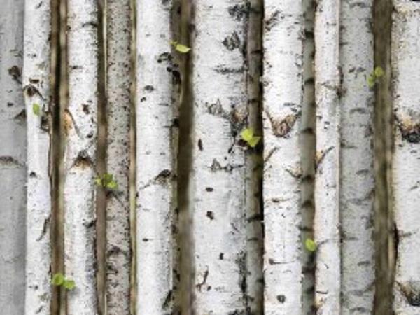 Mẫu giấy dán tường giả gỗ với tạo hình cây vô cùng chân thật (Mẫu: Nature 87009-2)