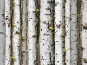 Giấy dán tường hàn quốc nature 87009-2