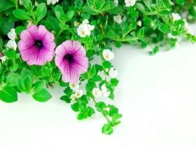 Tranh hoa lá DHL2010