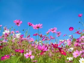 Tranh hoa lá DHL2013