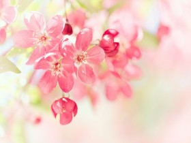 Tranh hoa lá DHL2014