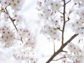 Tranh hoa lá DHL2015