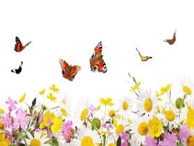 Tranh hoa lá DHL2020