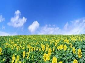 Tranh hoa lá DHL2023